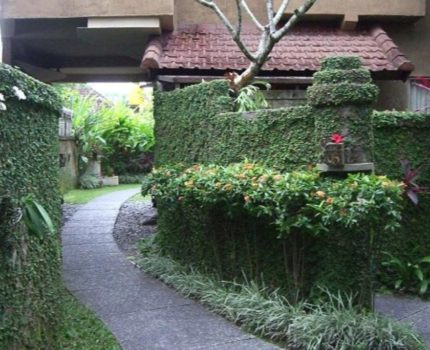 実際に泊まった感想 バリ島 ウブド トゥンジュンマス バンガロー Tunjung Mas Bungalow