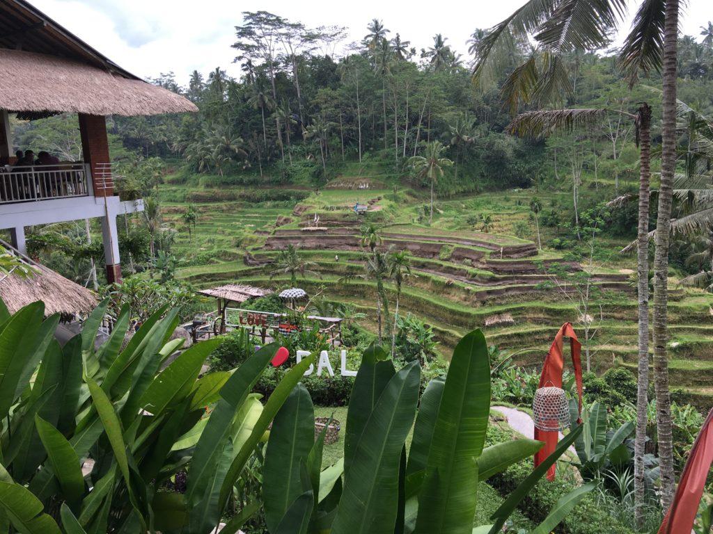 bali tegallalang rice terrace