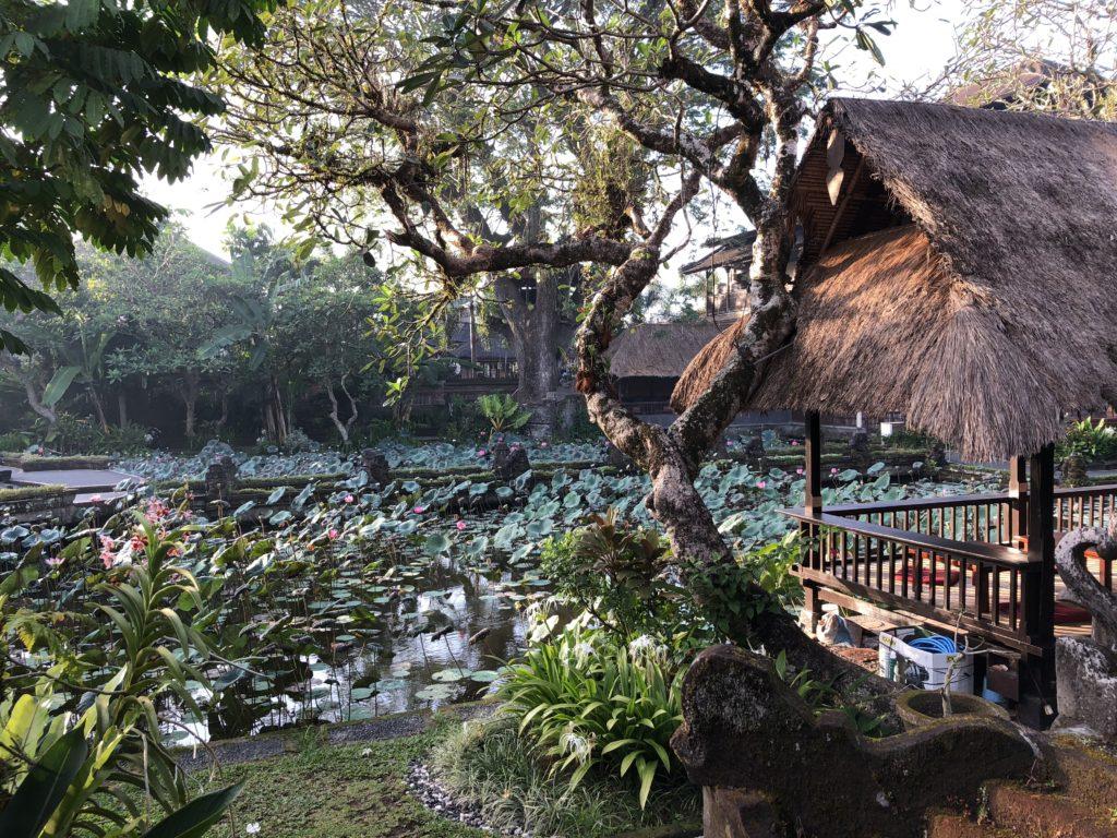 puri-saraswati-bungalows-ubud-bali-rev